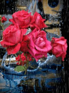 Roses-in-the-rain.gif