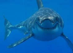 If a shark smiled at me I might pee myself.