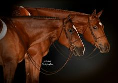Orange is the newbay & denying your assets. Aqha hunter under saddle. Under guidance of wendy laesch show horses and owned by Mary Caitlyn O'Malley. 3 year old hunt seat horse. American Quarter Horse, Quarter Horses, Hunter Under Saddle, Hunt Seat, Show Horses, Equestrian, Mary, Orange, Life