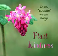 """In any """"season"""" we can always plant kindness."""