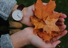 Feuilles orangées + jolie montre