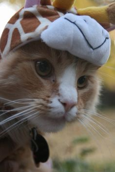 Giraffe kitty