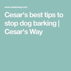 Cesar's best tips to stop dog barking | Cesar's Way