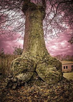 Porn tree II :D