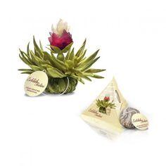 Creano Erblüh-Teelini Weißer Tee Peach Pearl