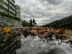 Down, West Vancouver | Mark Faviell, Flickr