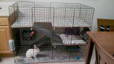 DIY Indoor rabbit cage / condo
