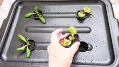 Hydroponic Gardening in a tub #hydroponics #hydroponicgardeningcenter