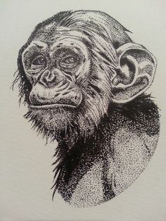 monkey done with pen and ink. stippling dotwork