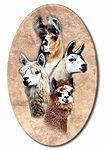 A comprehensive site that really should be visited because it will likely meet all your needs in one-stop shopping. Over 3 dozen linked categories to meet your every llama and alpaca need. Spinning, Clock, Meet, Wool, Shopping, Products, Hand Spinning, Watch, Clocks