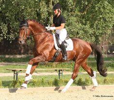 Christoph Hess: Ride Like a Dressage Professional
