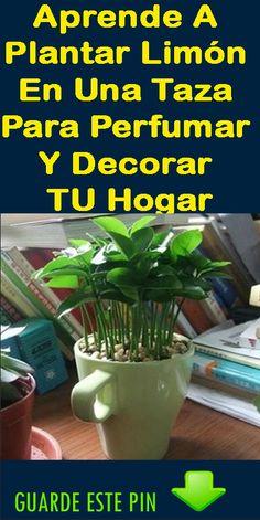 aprende a plantar limón en una taza para perfumar y decorar tu hogar.