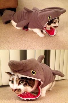 Watch out for Cat Shark! I found Puzzles a Halloween costume. Cat Shark Costume, Shark Costumes, Animal Costumes, Pet Costumes, Crazy Cat Lady, Crazy Cats, Cute Baby Animals, Funny Animals, Animals Images
