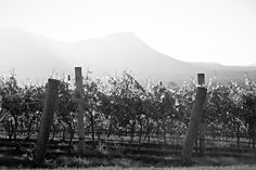 Beautiful Hunter Valley Vineyards from Scarborough #wine