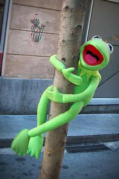 Funny Frogs, Cute Frogs, Miss Piggy, Sapo Kermit, Funny Kermit Memes, Spongebob Memes, Sapo Meme, Wow Meme, Frog Wallpaper