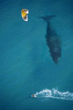 Awesome aerial photograph of a kite surfer and a Blue Whale by photographer Mike Swaine