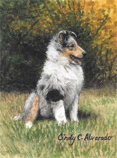 The leaves are changing to gold, and a blue rough Collie puppy is ready to explore the auutum fields in this miniature original watercolor painting. Cindy has been a member of the Miniature Art Society of Florida and has exhibited in the juried International Miniature Art Show. This small 2.5 x 3.25 watercolor painting is painted with very fine brushes and has great detail. It is on heavy handmade Arches watercolor paper, painted with WinsorNewton watercolors with rich yet delicate colors…
