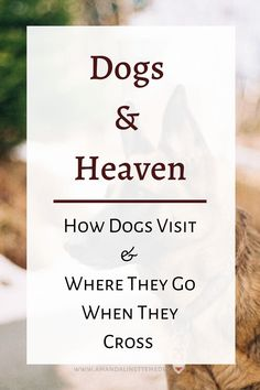 Pet visitations from the afterlife are read. How does your dog visit you from Spirit? Check out this post! Photo of German Shepard by Christoph Schmid on Unsplash with text overlay, Dogs & Heaven: How Dogs Visit and Where they Go When They Cross. Pet Loss Grief, Loss Of Dog, Pet Memorial Gifts, Dog Memorial, All Dogs, Pass Away Quotes, Rainbow Bridge Dog, Dog Passed Away, Dog Poems