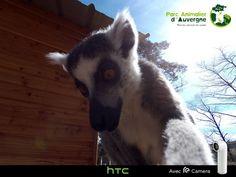 Les animaux du Parc Animalier d'Auvergne adeptes du selfie avec la caméra HTC RE