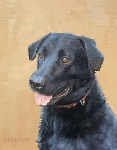 Clarence by Beth Marchant Oil Labrador Retriever, Paintings, Oil, Animals, Labrador Retrievers, Animales, Paint, Animaux, Painting Art