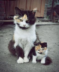 A mini-me! Today is Caturday