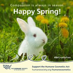 Help us end cosmetics testing on bunnies and other animals! #BeCrueltyFree #HumaneCosmeticsAct