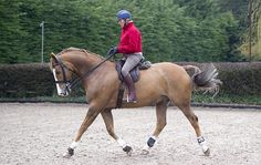 Struggling to get your horse going in an outline? 4 exercises to help you out - Horse & Hound
