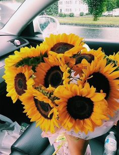 62 Ideas For Plants Aesthetic Life Plant Aesthetic, Flower Aesthetic, My Flower, Beautiful Flowers, Orange Pastel, Sunflower Wallpaper, Happy Colors, Cool Plants, Mellow Yellow