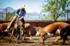 """O6 Cutting Horse Competition"" by Cathy McNair, celebrating the Big Bend Ranch Rodeo (Aug 8-9) via the #shootingalpine Photo Contest! #alpinetexas"