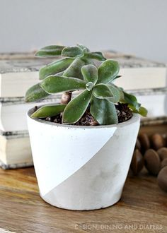 Paint Dipped Concrete Planter