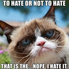Grumpy cat hating