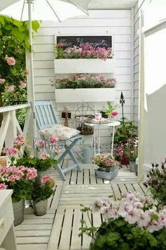 Potted garden#window boxes # container