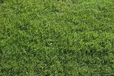 Cada cuánto cortar el césped - http://www.jardineriaon.com/cada-cuanto-cortar-el-cesped.html