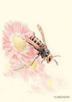 小型スズメバチ Pictures Of Insects, Pictures To Draw, Colored Pencils, Animals, Animales, Colouring Pencils, Animaux, Crayons, Paint Colors
