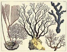Albertus Seba-fine art giclee reproduction prints