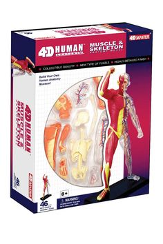 TEDCO Toys 4D Human Human Muscle & Skeleton Anatomy 46-Piece Set #KidsFashionPhotography Human Anatomy Model, Anatomy Models, Skeleton Anatomy, Skeleton Model, Skeletal System, Human Human, Kids Fashion Photography, Science Fair Projects, Some Fun