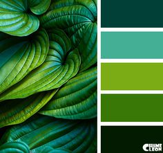 CHAMELEON Color Palette. Variety of shades of green for a brilliant brand board or branding design idea. Mint, peppermint, evergreen, and kiwi citrus green make a lovely combination. Hues. Color mood board.
