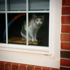 The cat in the window