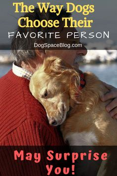You would think that a dog's favorite person would be whoever gives them the most food and attention, right? Does your dog have a favorite person? This is How Dogs Choose Their Favorite Person Animal Pick, Dog Information, Pets For Sale, Dog Hacks, Dog Behavior, Favorite Person, Dog Care, Dog Training, Training Videos