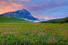 The Crested Butte Wildflower Festival. Looks like a painting. Photo: Allan Ivy
