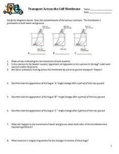 Cell Membrane Coloring Worksheet Answer Key Coloring