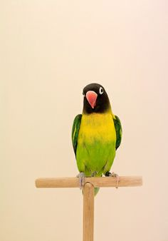 Lovebird #6, by Luke Stephenson - 20x200.com (from $60)