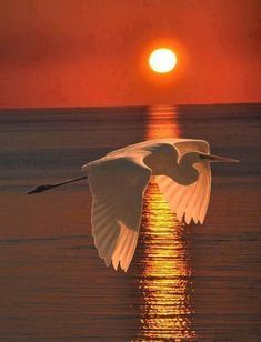 Beautiful Birds on Sunsets. Beautiful Sunset, Beautiful Birds, Beautiful Images, Animals Beautiful, Animals Amazing, Pretty Animals, Beautiful Life, Beautiful Moments, Cool Pictures