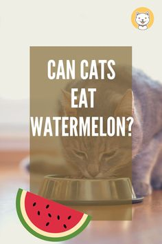 Can cats eat watermelon? More to know about cat diet Cat Health, Health Tips, Cat Diet, Watermelon Rind, Cat Care Tips, Cat Facts, Domestic Cat, Best Relationship, Cat Food