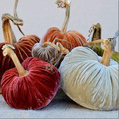 ❥ beautiful velvet pumpkins