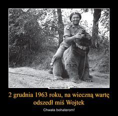2 grudnia 1963 roku, na wieczną wartę odszedł miś Wojtek – Chwała bohaterom! Poland History, Angels And Demons, My Heritage, World War Two, Retro, Wwii, Study, Military, Lol