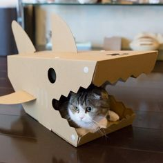 Maison requin en carton