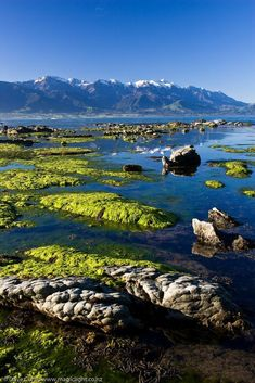 New Zealand Travel Inspiration - Kaikoura Peninsula, Canterbury, South Island, New Zealand