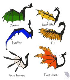 Dragon wings types by Flying-With-Dragons on DeviantArt flies butterfly frogs Creature Drawings, Animal Drawings, Dragon Anatomy, Types Of Dragons, Wings Of Fire Dragons, Wings Drawing, Dragon Sketch, Dragon Artwork, Mythical Creatures Art
