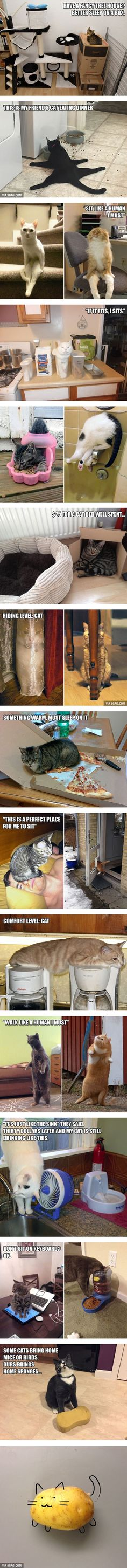 20 Funny Examples of Cat Logic - 9GAG